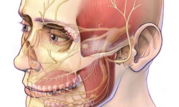 Воспаление тройничного нерва: чем оно опасно, симптоматика, способы лечения